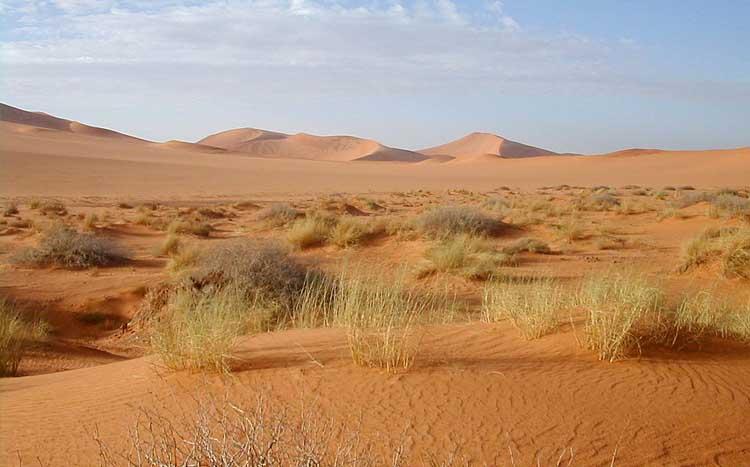 El pastoreo excesivo es la causa principal de la desertificación.