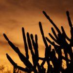 Qué es desertificación: causas y consecuencias