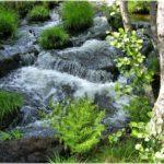Las reservas naturales fluviales (RNF), se crearon en España con el objetivo de preservar tramos de ríos con escasa intervención humana.