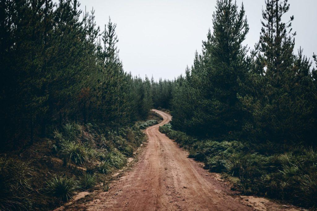 La naturaleza y sus beneficios como terapia