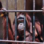 deforestación de la jungla tropical y otros problemas medioambientales en Borneo