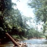 La Reserva de la Biosfera Río Plátano tiene 5.250 km2 de tierra preservada en la región de La Mosquitia en la costa caribeña de Honduras.