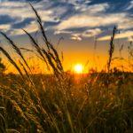historia de la agricultura - cómo se descubrió la agricultura