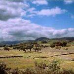 Las Dehesas de Sierra Morena son una reserva de la biosfera de España, declarada en 2002, tras una propuesta de la Junta de Andalucía.