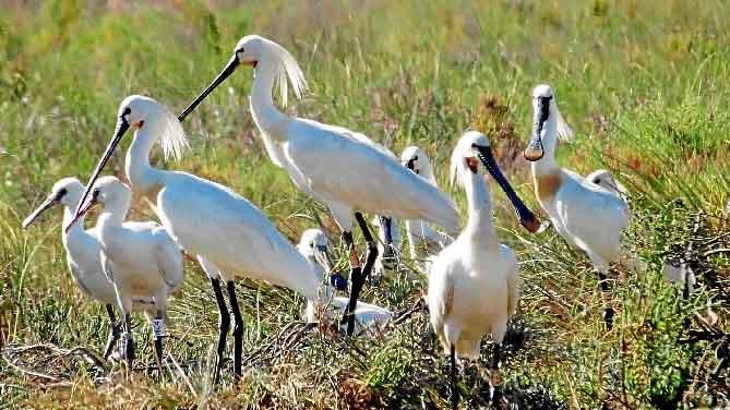 El Paraje Natural de las Marismas del Odiel es un espacio natural situado en la desembocadura del río Odiel o ría de Huelva, en Andalucía.