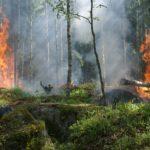 Día del Combatiente de Incendios Forestales - los incendios son un desastre forestal
