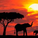 Sudáfrica es una república parlamentaria situada en el extremo sur de África. es conocida por su diversidad de culturas y especies.
