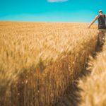 La agricultura de regadío representa el 80% del total del agua utilizada a nivel mundial