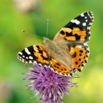 mariposas se acercan a la luz