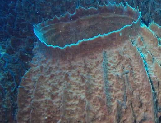 cuánto conocemos del fondo marino