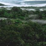 el estado de la selva tropical y la crisis del agua en Sao Paolo