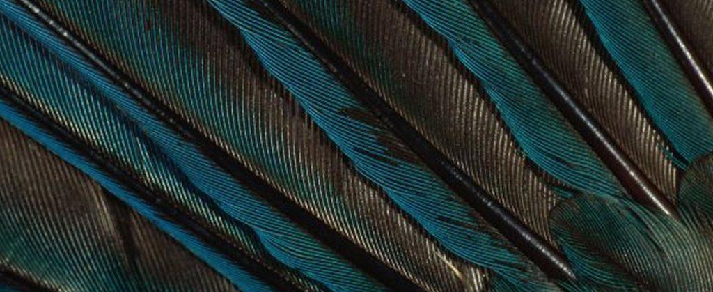ornitología, mi pasión por los pájaros