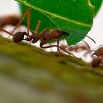 Las hormigas obreras se han utilizado como referencia para explicar cómo funciona la sociedad, pero las hormigas ociosas forman también parte de ella.