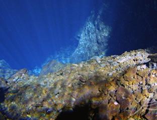 Los Jameos del Agua desembocan en el mar a través del Túnel de la Atlántida. Un lugar en el que habitan multitud de especies
