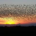 En este artículo, Mónica Fernández-Aceytuno nos anima a observar el vuelo de aves como los ánsares y las grullas de las ciudades españolas