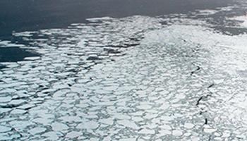 Hice mi primer viaje al Ártico a mediados de los 90. Ya entonces los nativos de esa zona hablaban de la disminución del hielo marino.