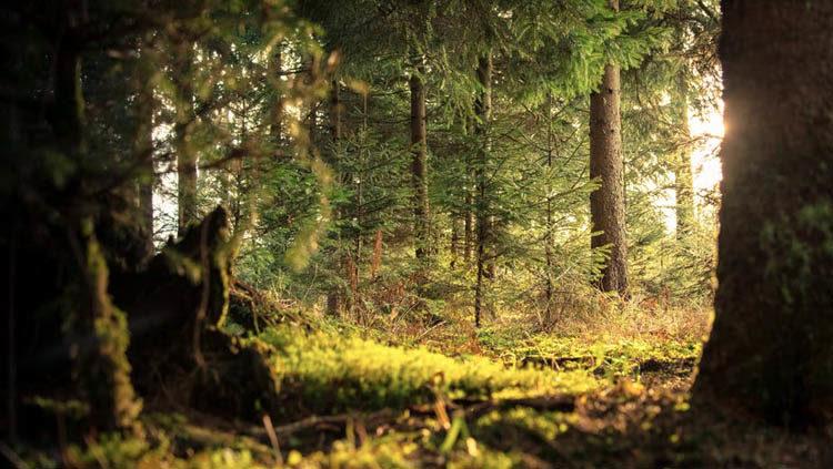 cuántos árboles hay en España