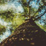 Cuánto CO2 absorbe un árbol - capacidad de sumidero de co2 de los árboles