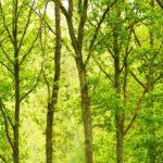 bosque templado y su extensión