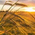 El fotoperiodo es un proceso de exposición a la luz que realizan las plantas para realizar sus funciones vitales