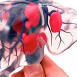 El bioprinting es un un método para construir tejidos vivos con la impresión tridimensional (3D) de células