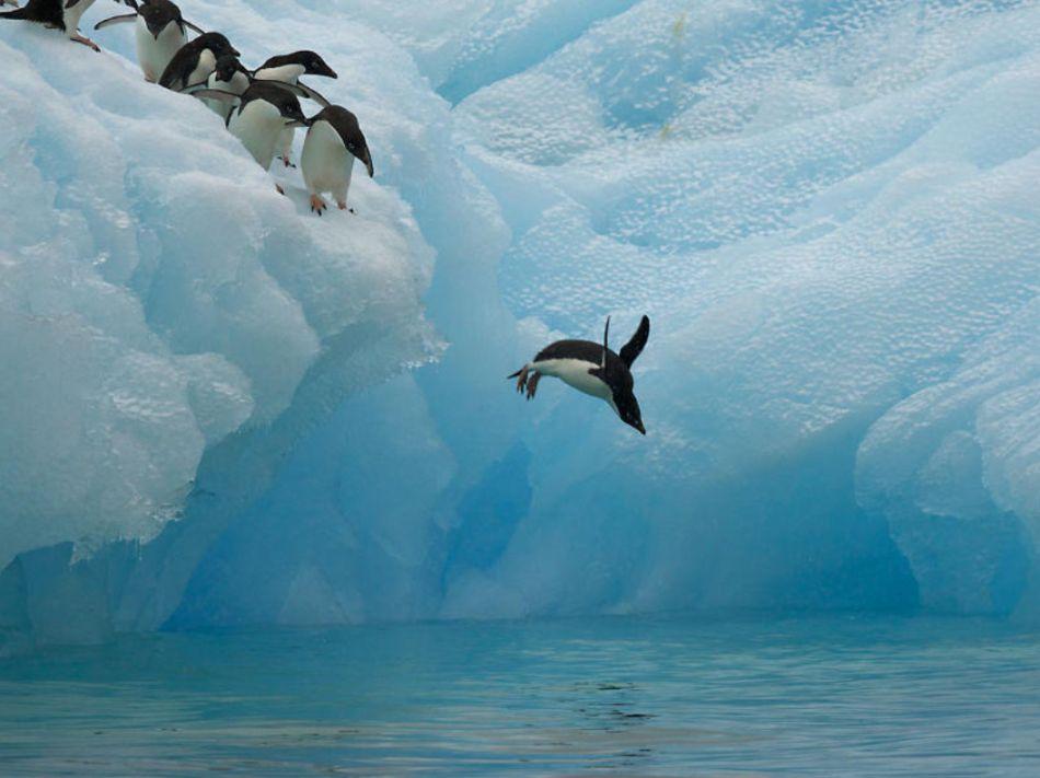 Los pingüinos al borde del colapso global