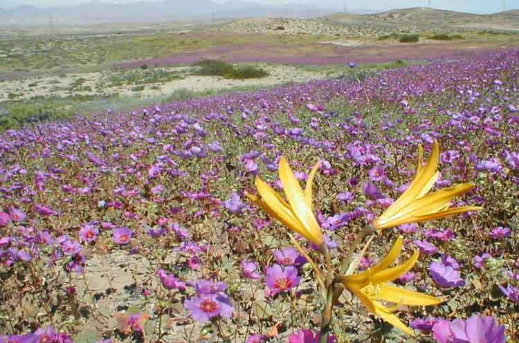 El desierto de Atacama y su brutal aridez