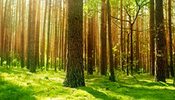 El Día del Árbol y de la Reforestación nos brinda un momento para la reflexión sobre cómo afecta el cambio climático a los bosques