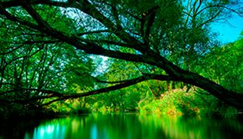 Día Mundial de la Naturaleza: por amor a ella y el medio ambiente