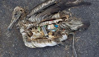 En este artículo exploramos la relación de los seres humanos con el medio ambiente a través de los grandes desastres provocados por ellos.