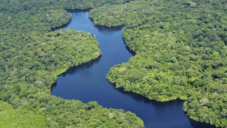 Amazonia Descubre Sus Secretos Fundación Aquae