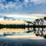 selva amazónica o amazonía