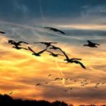 Mónica Fernández-Aceytuno nos habla sobre las aves migratorias, cuya supervivencia depende de una alimentación itinerante