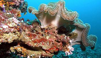 La luz es uno de los factores ambientales que puede hacer que los arrecifes de coral cambien de color