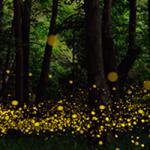 las luciérnagas en verano