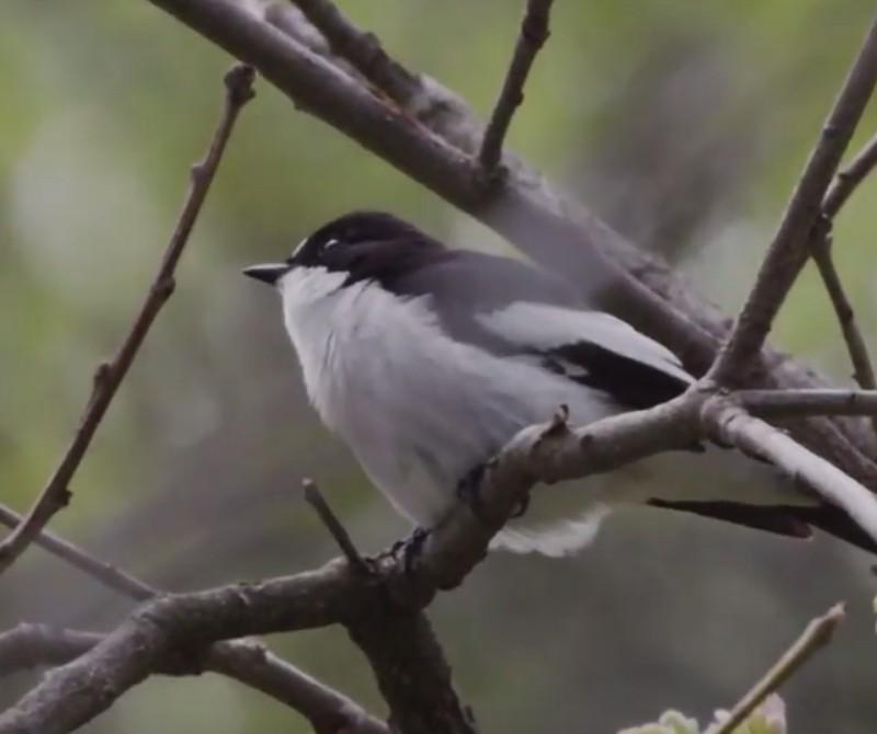 Clips Natura dia de la biodiversidad