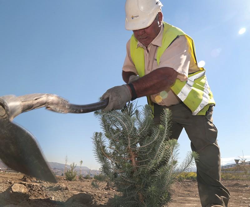Plantamos 700 árboles en Granada
