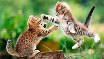 Los medios de comunicación basados en internet nos están demostrando que realmente existe una sensibilidad social en cuanto a los animales.