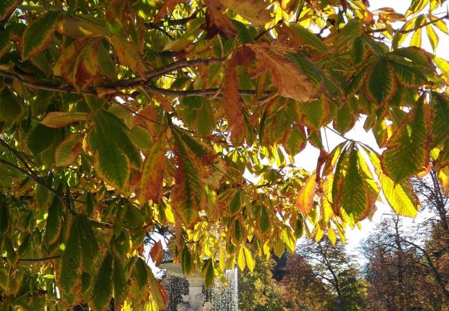 las-hojas-mas-altas