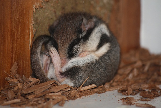 liron-careto-hibernando-aceytuno