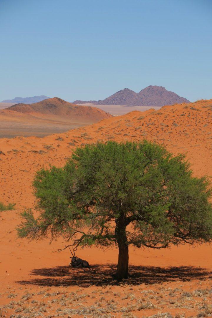 """""""Acacia"""" es un término que engloba a más de 1.400 especies de arbustos y de árboles de la familia Fabaceae que destacan por su resistencia."""