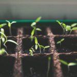 Los huertos urbanos proporcionan alimentos, generan empleo y reciclan residuos urbanos. Descubre la revolución de la agricultura urbana.