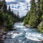 acciones para cuidar el agua y no contaminarla