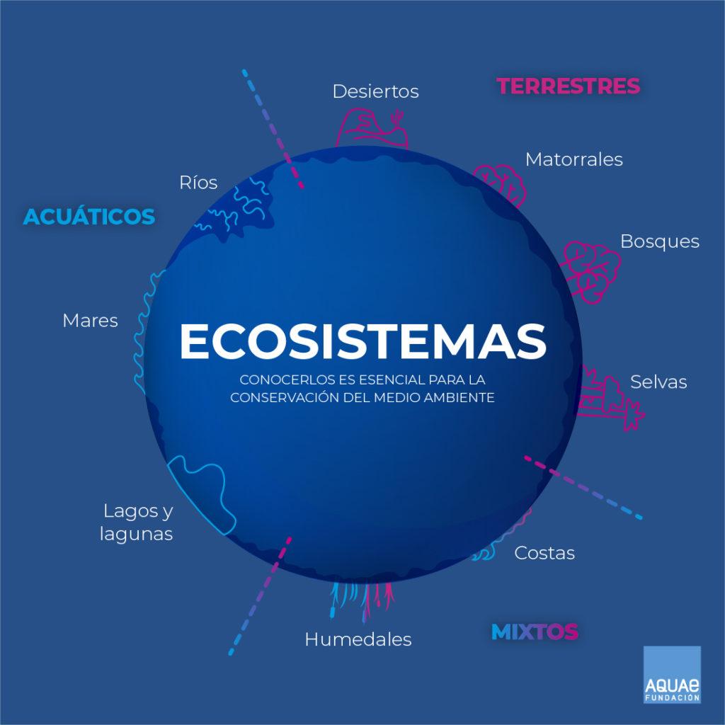 ¿Qué son los ecosistemas?