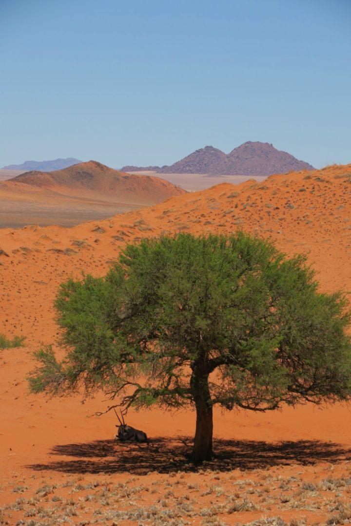 El desierto de Namibia, el desierto africano más peculiar