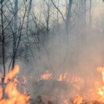 como prevenir incendios forestales