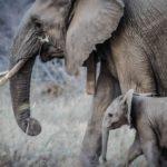 Día Mundial de los Animales, 4 de octubre