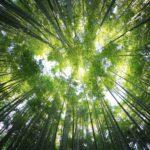 bosques sorprendentes y exóticos