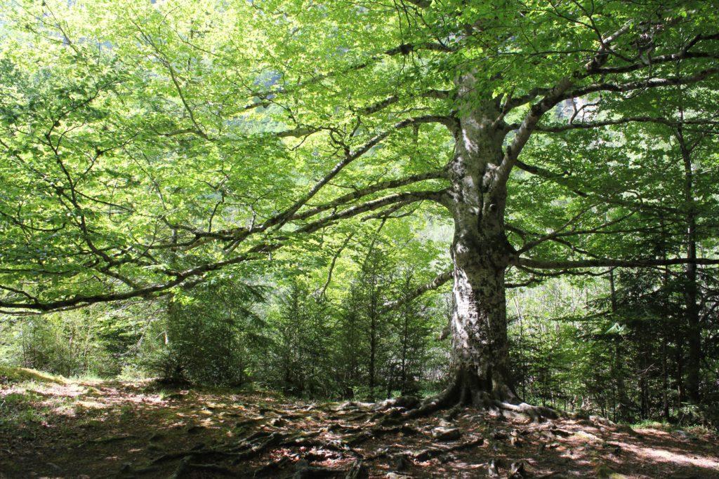 ¿Por qué son importantes los árboles?