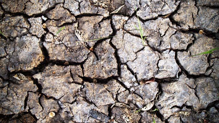 Un seguro basado en los Índices de Sequía.